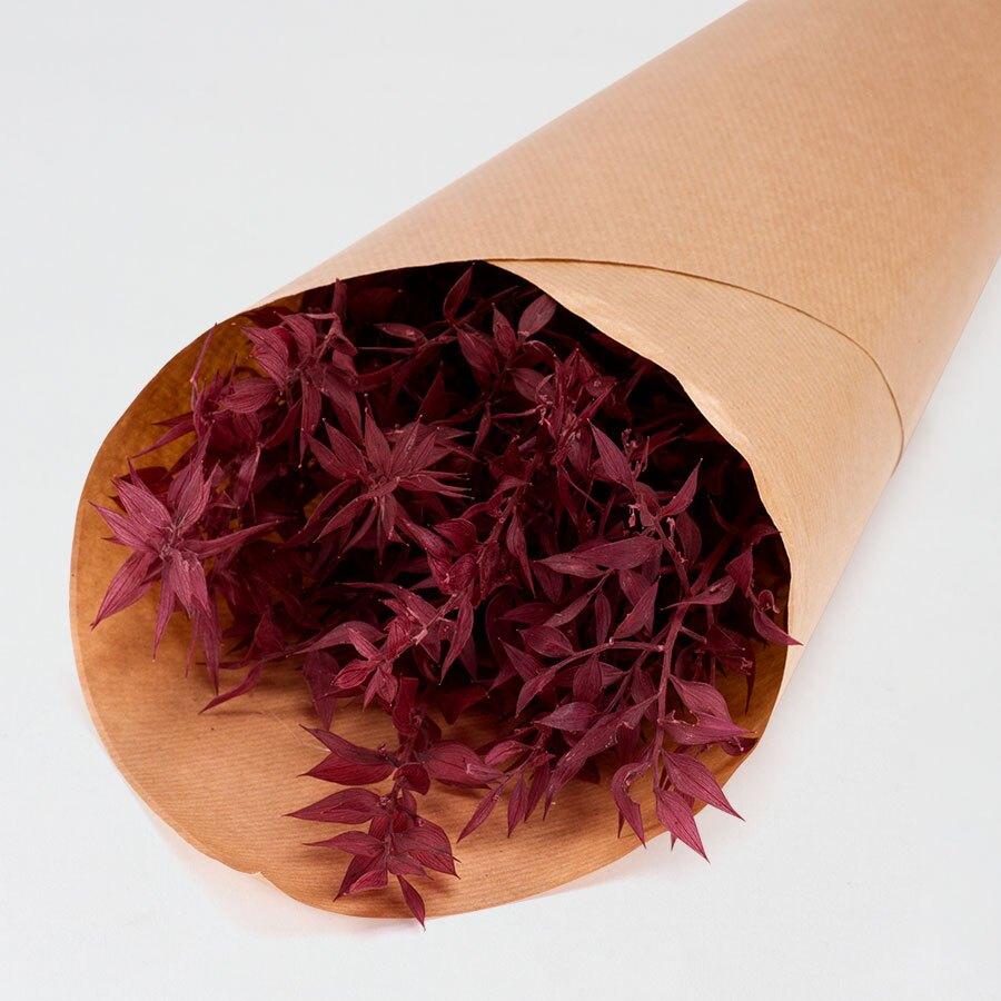 droogbloemen-ruscus-framboos-TA182-171-15-1