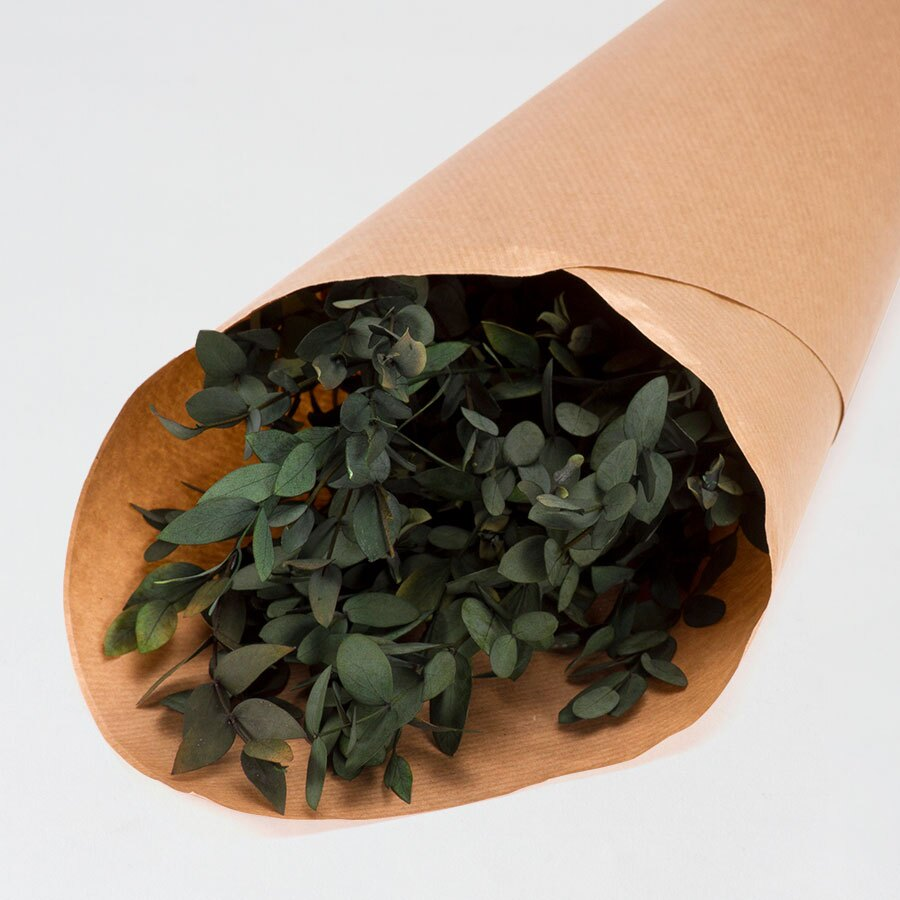 droogbloemen-eucalyptus-parvifolia-TA182-177-15-1